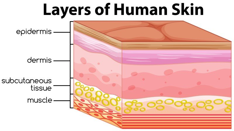 Layers of human skin Microneedling